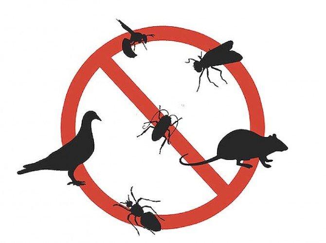 Pest Control Auckland