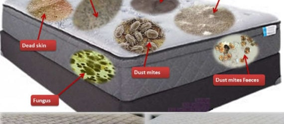 Dirty mattress with shown mites needs mattress cleaning
